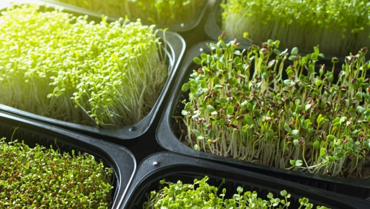 Microgreens as Functional Foods