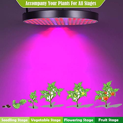 Vegetative/&Flowering Shengsite UFO 250 LEDs Indoor Plants Growing Lamp Bulbs with Red Blue Spectrum Hydroponics Plant Hanging Kit for Germination,Succulents 50W LED Plant Grow Lights
