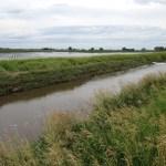 Dodge County Crop Report – June 23
