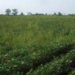Managing Weed Resistance