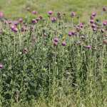 Fall Noxious Weed Control
