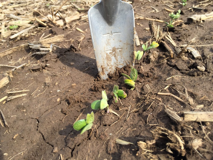 Stop 5: soybeans