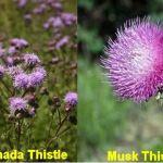 Control Noxious Weeds NOW