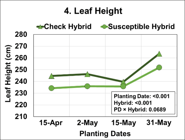 Graph of Effects of four planting dates and two hybrids on height of last developed leaf.