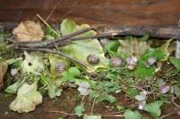 Thomas et les escargots - 17.05 (14)