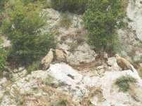 vautour fauve couple-800