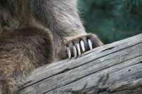 parc-animalier-des-pyrenees-2012-55-800