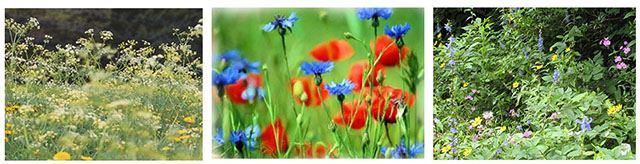Colors of Meadows & Fields