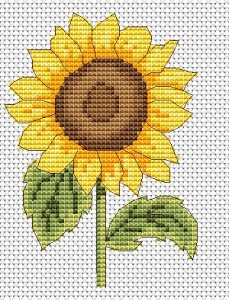 Sunflowers are Perfect for Summer