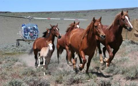 public lands and Mustang management