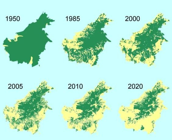 deforestation and palm oil