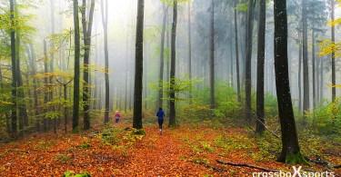 Herbstwald-läufer-laub-grüne-Blätter