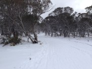 Part of the Hotham-Dp trail