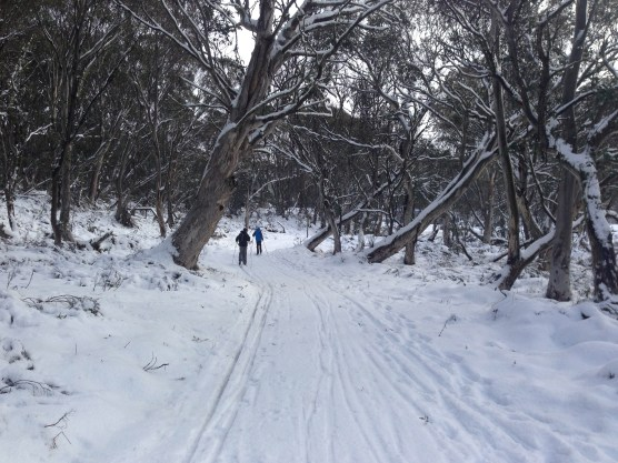 Sometimes the trails are better suited to Classic skiers