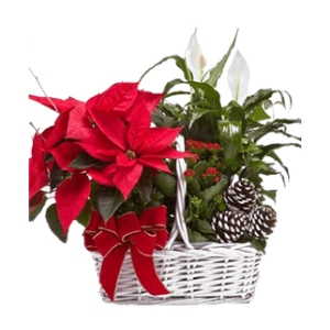 Red poinsettia christmas basket