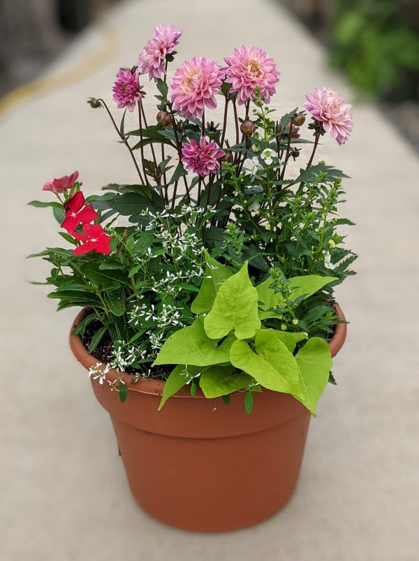These faux terra cotta pots are filled with a blend of fresh annuals like dahlias, geraniums, lantana, and much more