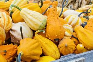 fall festival, gourds, pumpkins