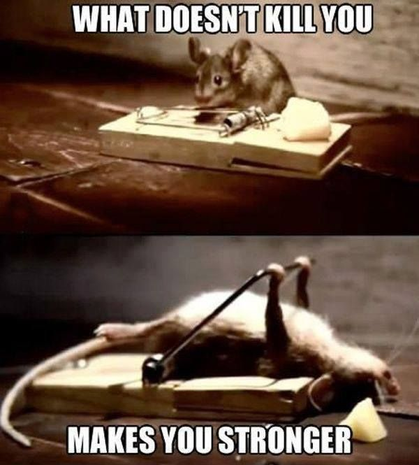mental-toughness mouse