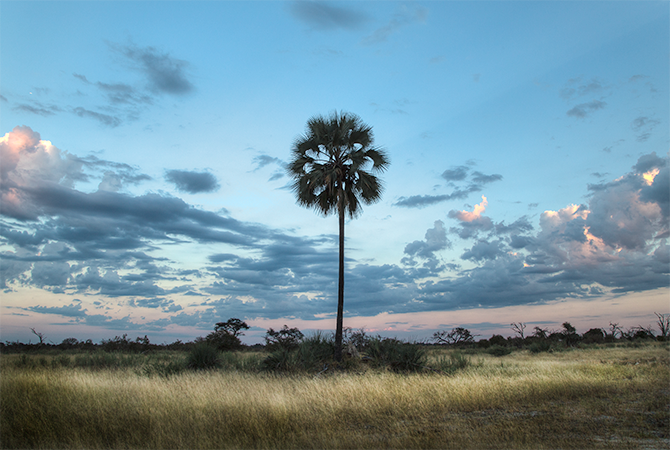 The early morning sun splashes the landscape in Botswana with light and color.