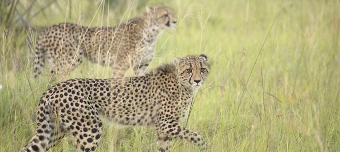 Three Miracles in Botswana
