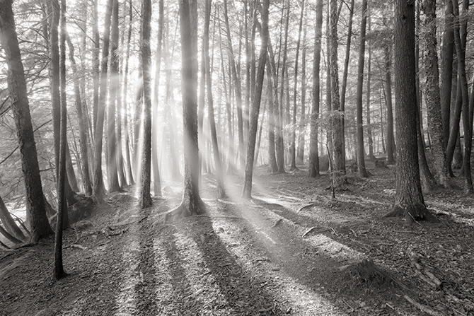 Wolf River Photographs Sun Shining Through Trees