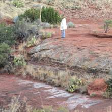 Nature connection in Sedona: Vortex Tour, Mystic Nature Shamanic Journey, Earth and Sky Speak to Us with Crossing Worlds Journeys. Photo by Sandra Cosentino