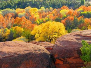 Fall colors and red rocks; shows the beauty of Sedona in the fall mystic vision retreats season