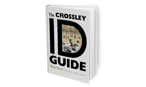 Richard Explains the Crossley ID Guides