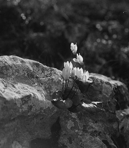 Rebirth, 1924