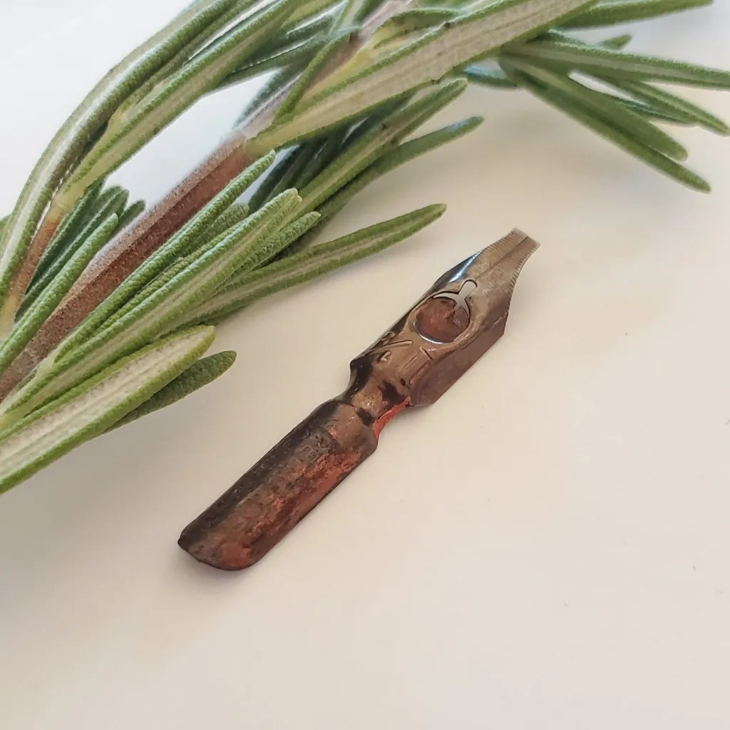 Crossroads Calligraphy -- Broad Pen calligraphy was our first love. Here we have a broad edged nib with another of out favorites: a Rosemary sprig.