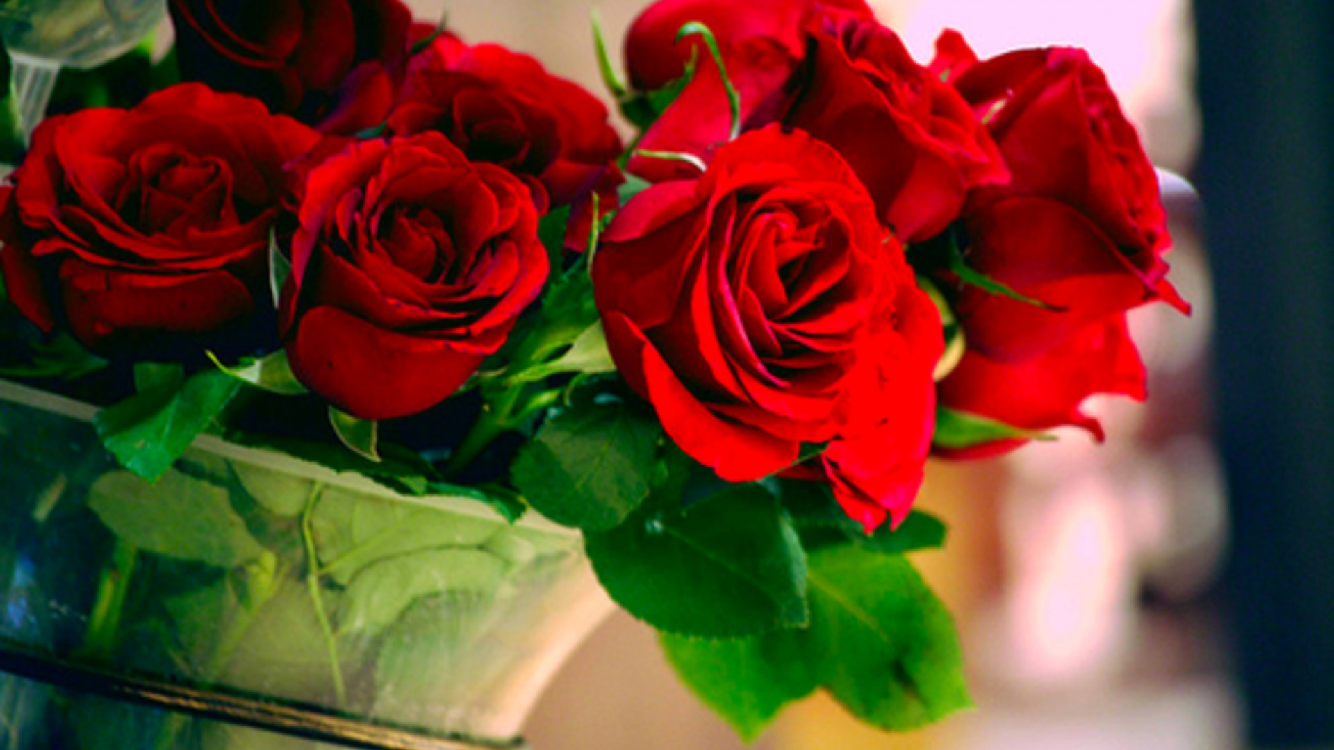 WHO KNEW? ROSES HAVE A RANK FOR VALENTINES DAY - Crossville News ...