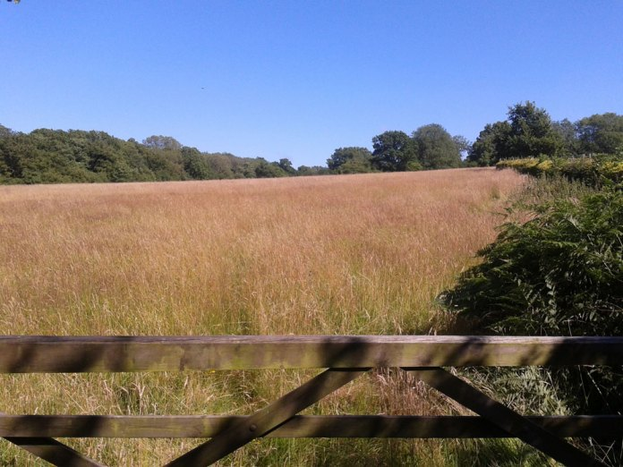New-burial-ground-at-Summer