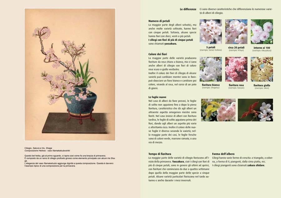 Piante e fiori dell'Ikebana – Copertina