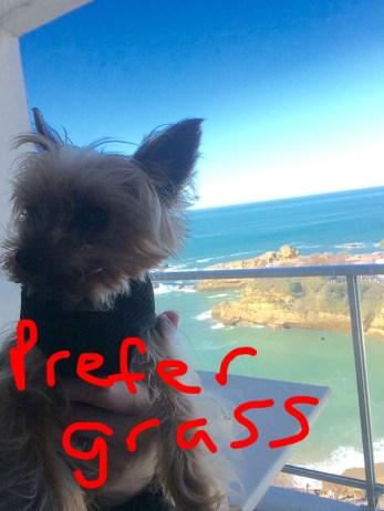 Poppy has her own instagram @pissedoffpoppy