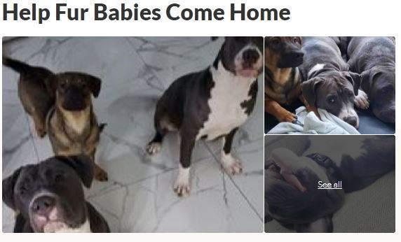 Help Fur Babies Come Home GoFundMe Boost ZumaFunder