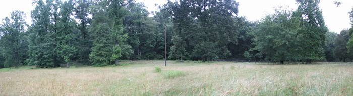 Central Field, June 2016. Upland fields at the Lynn Farm are grass dominated with occasional wildflowers and tree saplings. Scattered trees occur near the edges. Much of the power line spans the upland fields.
