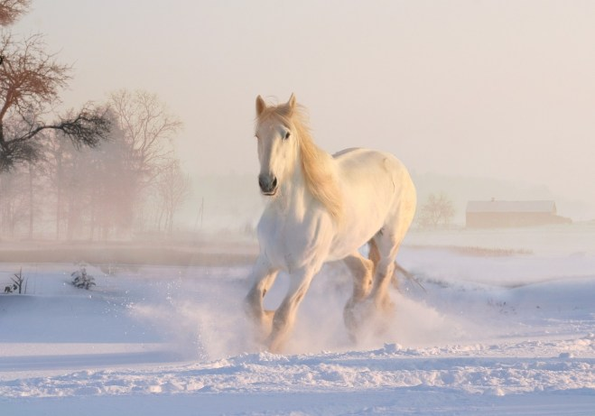 white connotation snow horse running