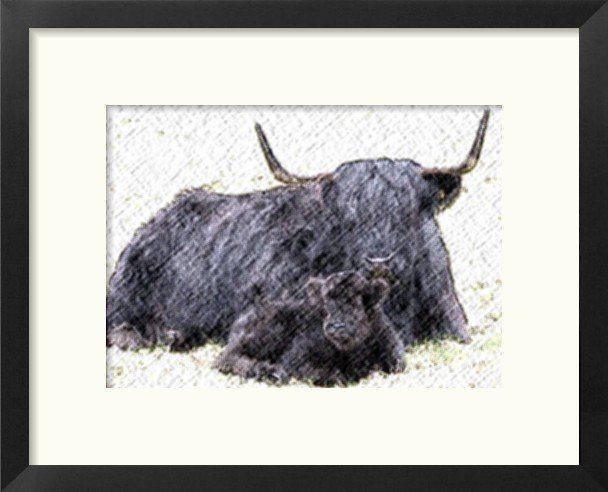 fotosketcherscottishblackhighlandcattle.jpg