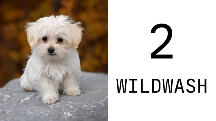 WildWash PRO Shampoo for Deep Cleaning and Deodorising is cruelty free