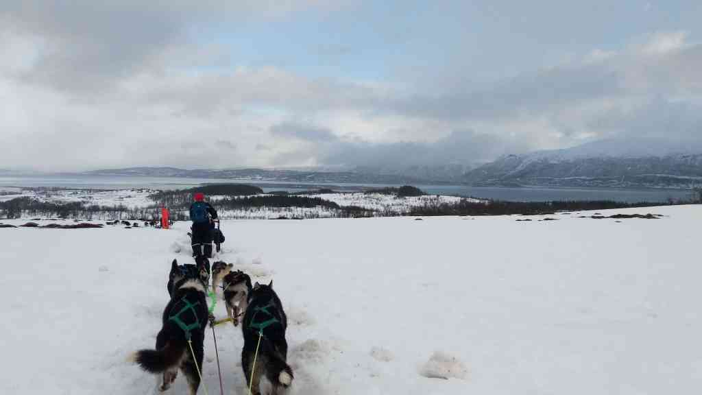 Dogsledding in Tromso, Norway