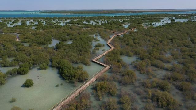mangrove boardwalk abudhabi 2
