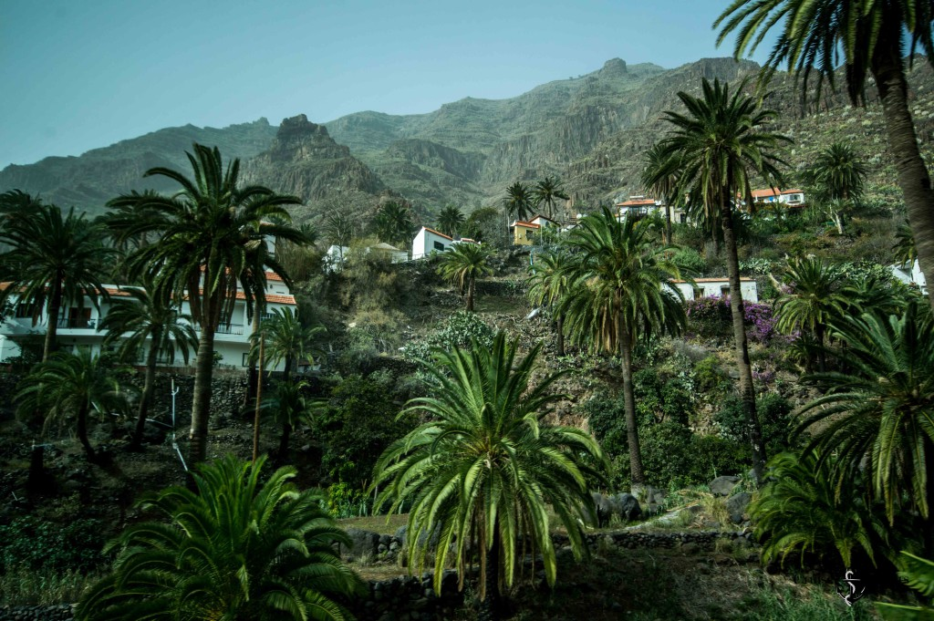 palm groves La Gomera