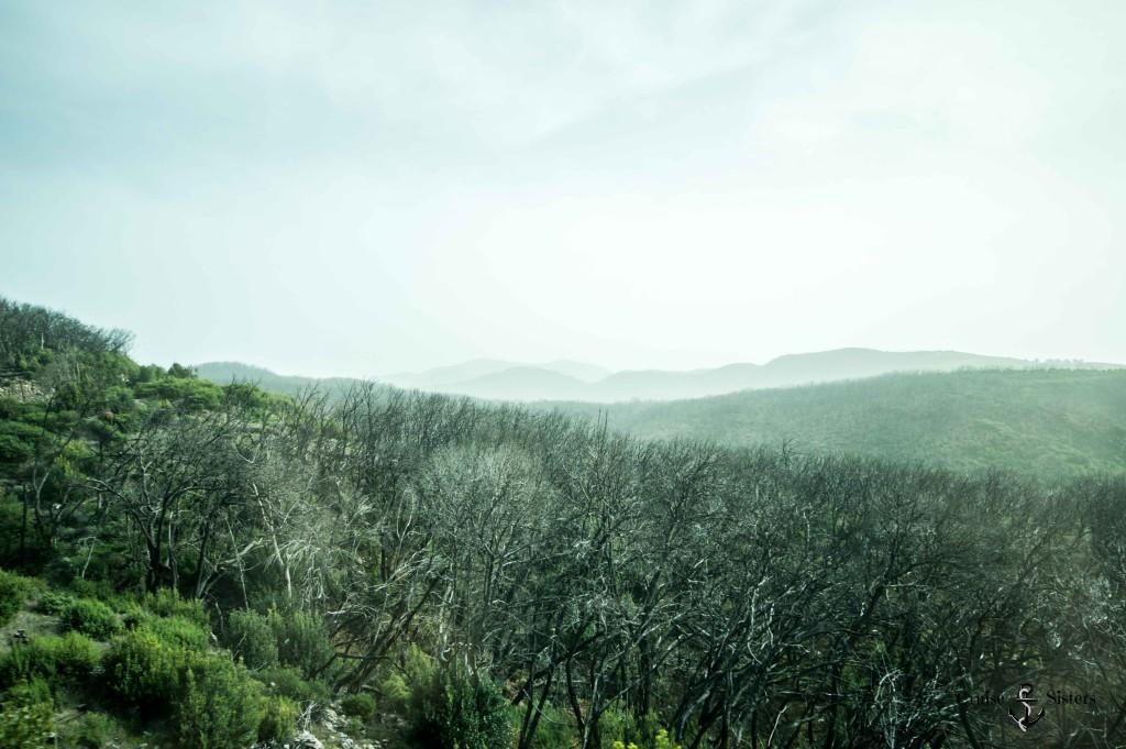 Auswirkung Waldbrand La Gomera