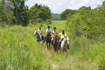 Braco-Stables Horseriding