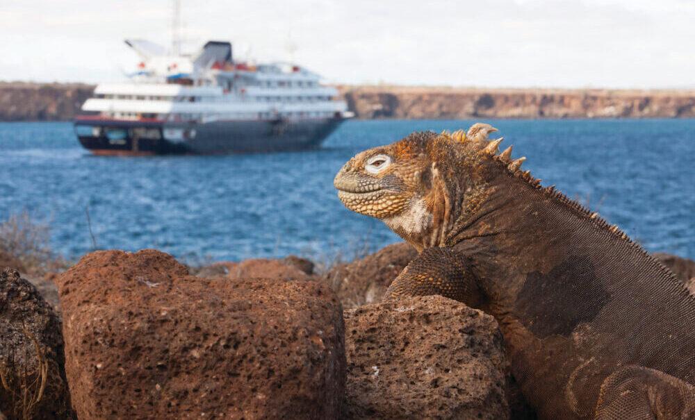 Seymour Øen med de legendariske hav leguaner på Galapagos Øerne