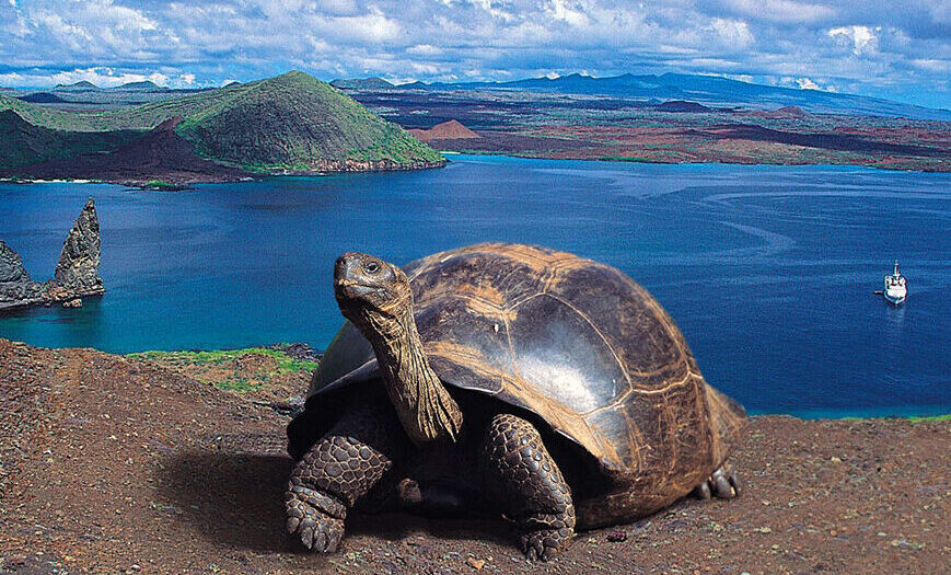 Kom tæt på de imponerende kæmpeskildpadder på Galapagos Øerne med Silversea Expeditions