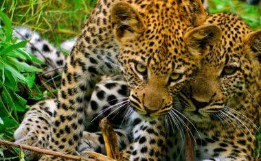 Deluxe safari travels to Botswana of Zambia