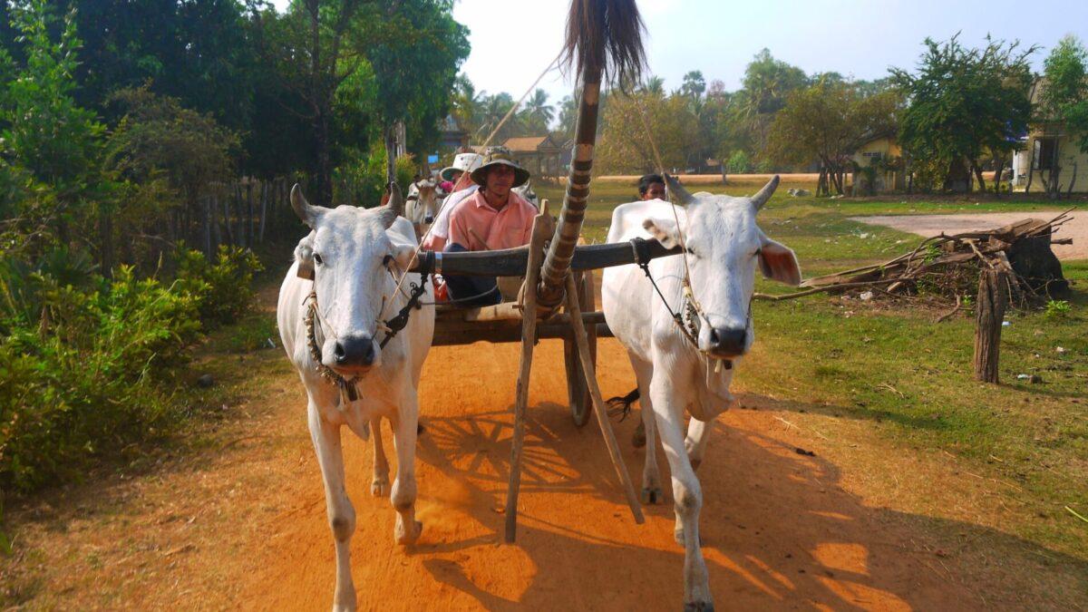 Se forskellige transportmidler gennem din Cambodia og Vietnam rundrejse