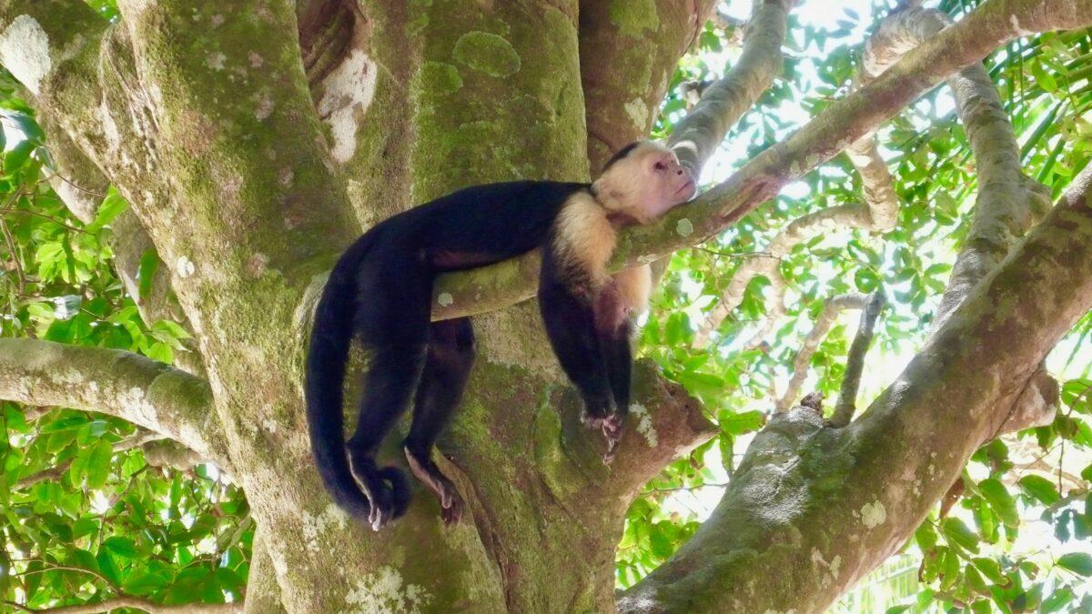Costa Rica byder på et rigt og helt unikt dyreliv