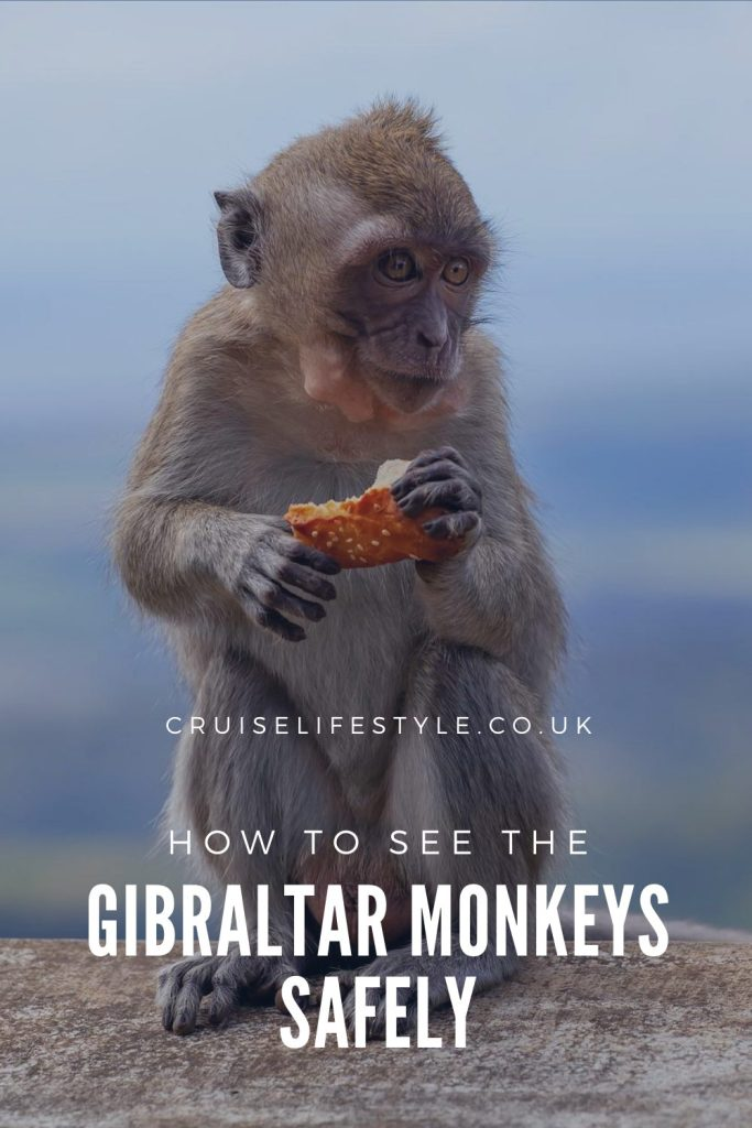 A guide to visiting the Gibraltar monkeys at the Top of the Rock, including safety advice, how to get there and where the monkeys hang out!